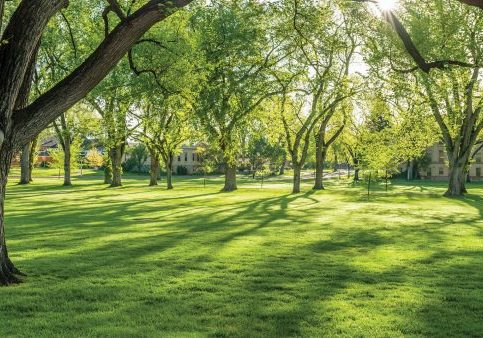 CSU Oval during summer